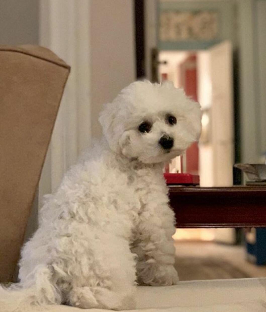 Prinsessan Maries och prins Joachims nya hundvalp Cerise.