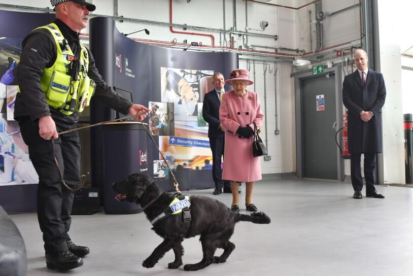 Drottning Elizabeth bombhund