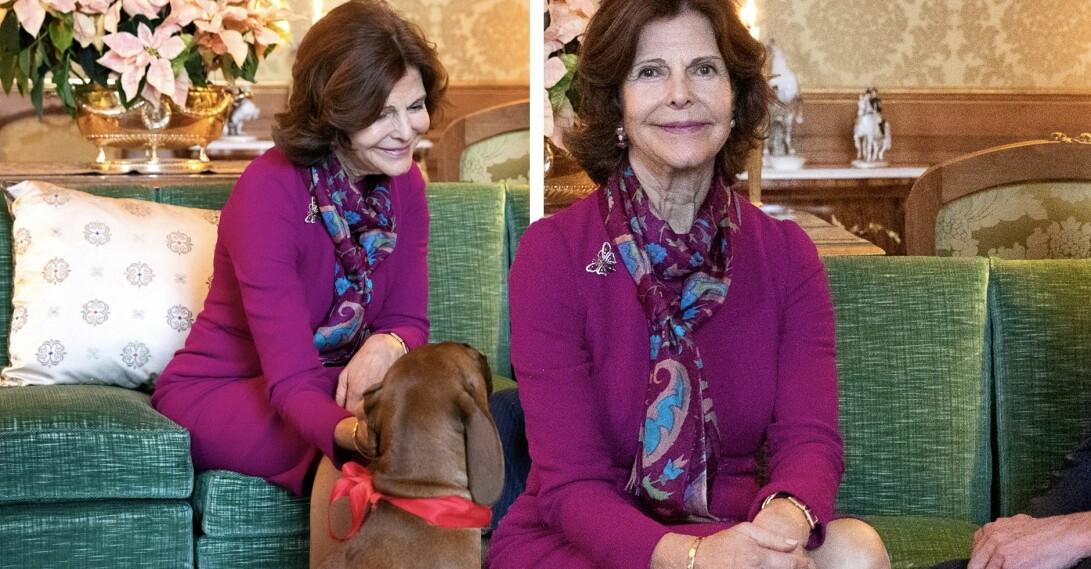 Drottning Silvia hunden Brandie förlovningssoffan
