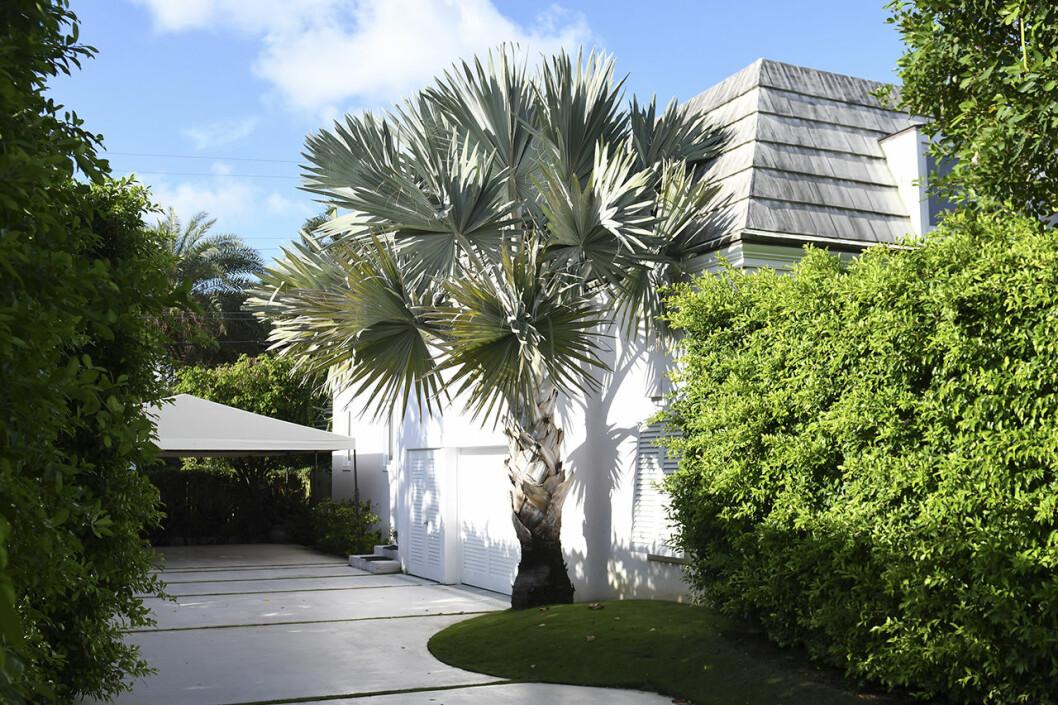 Palmerna svajar i vinden i Chris och Madeleines trädgård.