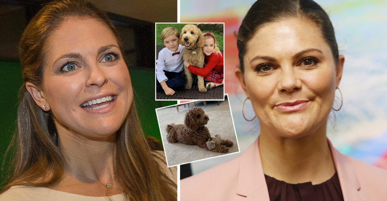 Prinsessan Madeleine Kronprinsessan Victoria Labradoodle Teddy Cavapoo Rio Kungliga hundar Blandrashundar