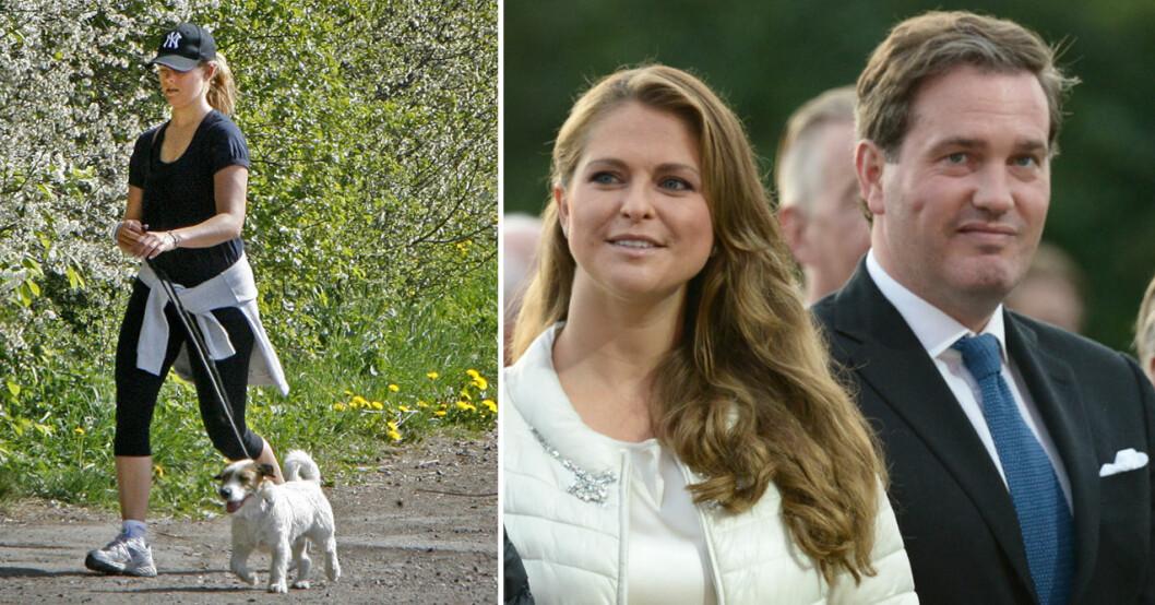prinsessan madeleine planerar att skaffa hund