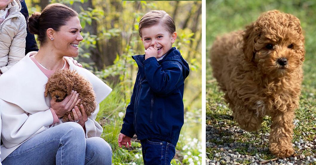 Kronprinsessan Victoria med hunden Rio som är en cavapoo.